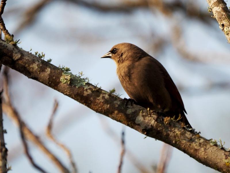 Quelques oiseaux P7260016_zpsb1wfdm2s