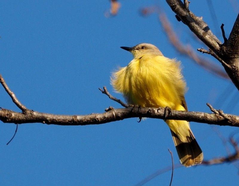 Oiseaux au jardin P8020023_zpskjsoojhg