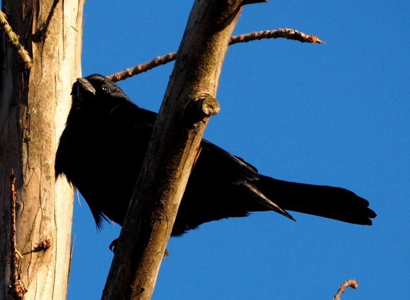 Oiseaux au jardin P8020027_zpsol9nedco