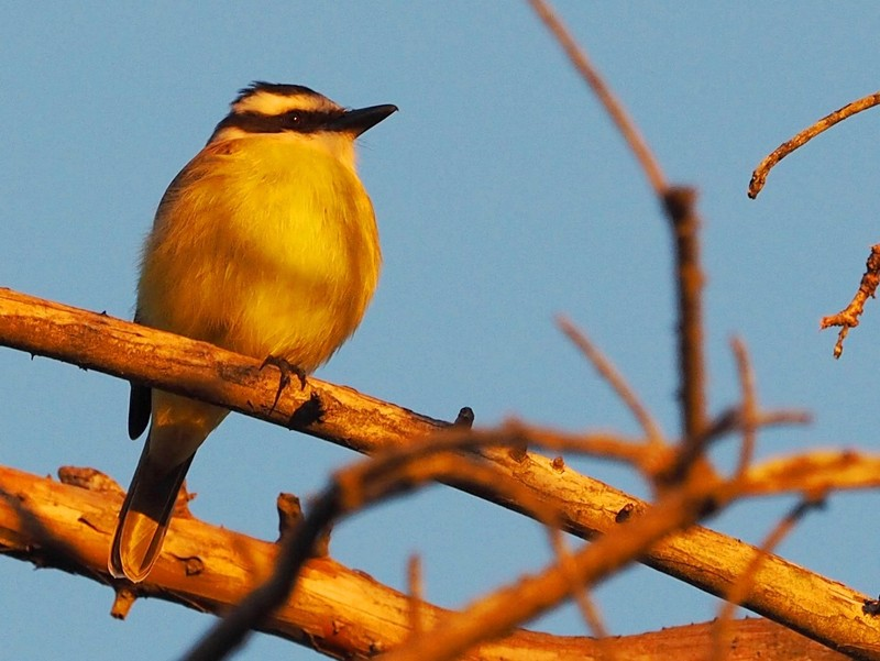 Oiseaux au jardin P8030037_zpsih78hnph