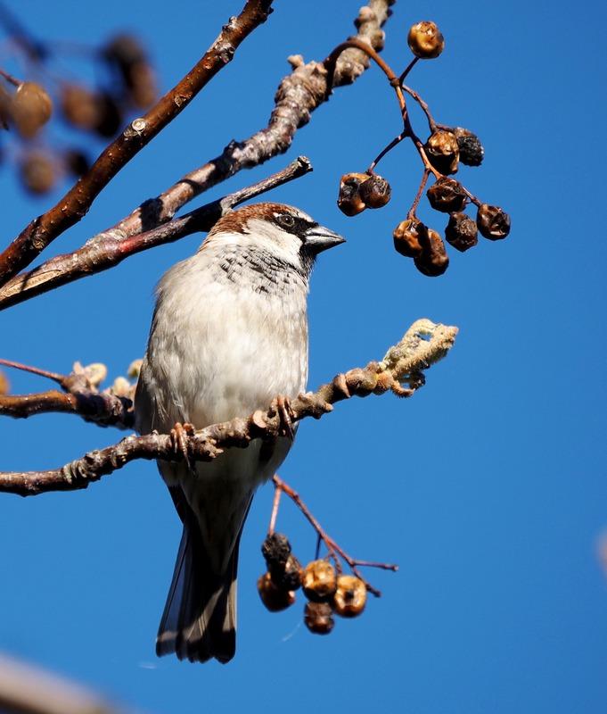 Oiseaux au jardin P8040007_zps3hn67hfn