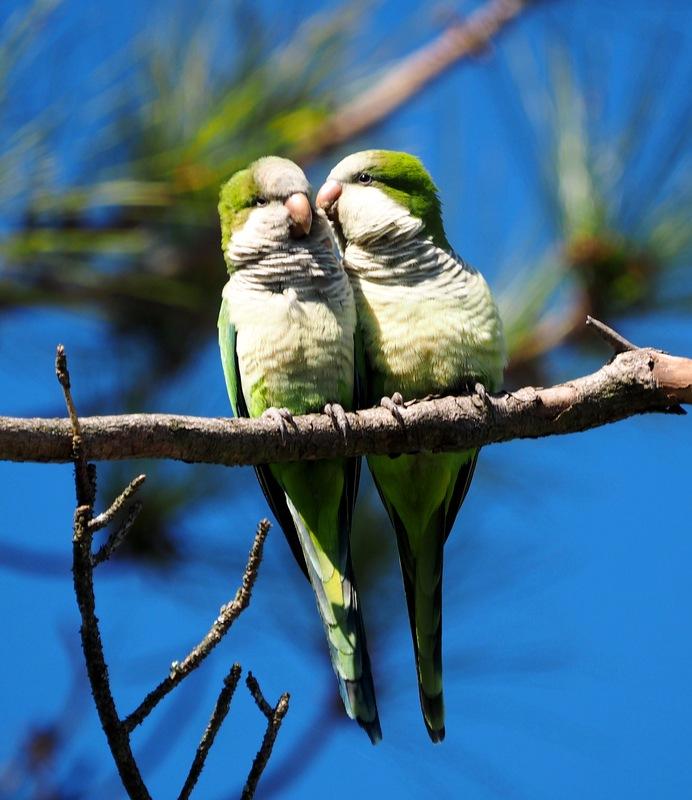 Ahhh l'amour!! P8040013_zpsidnrwjd5