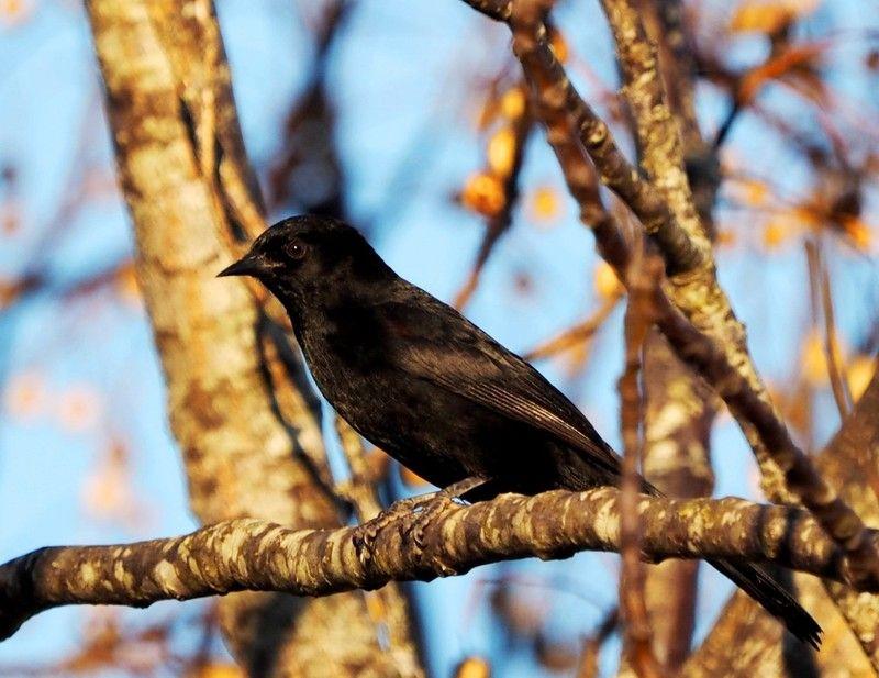 Oiseaux au jardin P8040026_zps4gizyilr