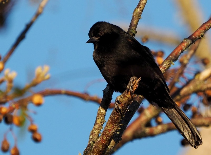 Oiseaux au jardin P8040028_zps5tzdatem