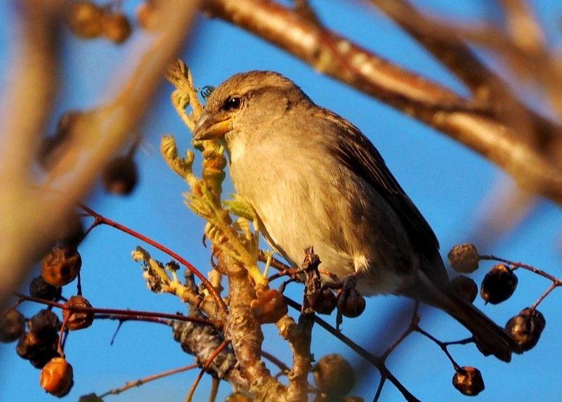 Oiseaux au jardin P8040030_zpsbuv5oqsv