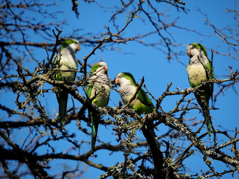 Encore quelques oiseaux de la Férme P8060010_zpszv8amg3x