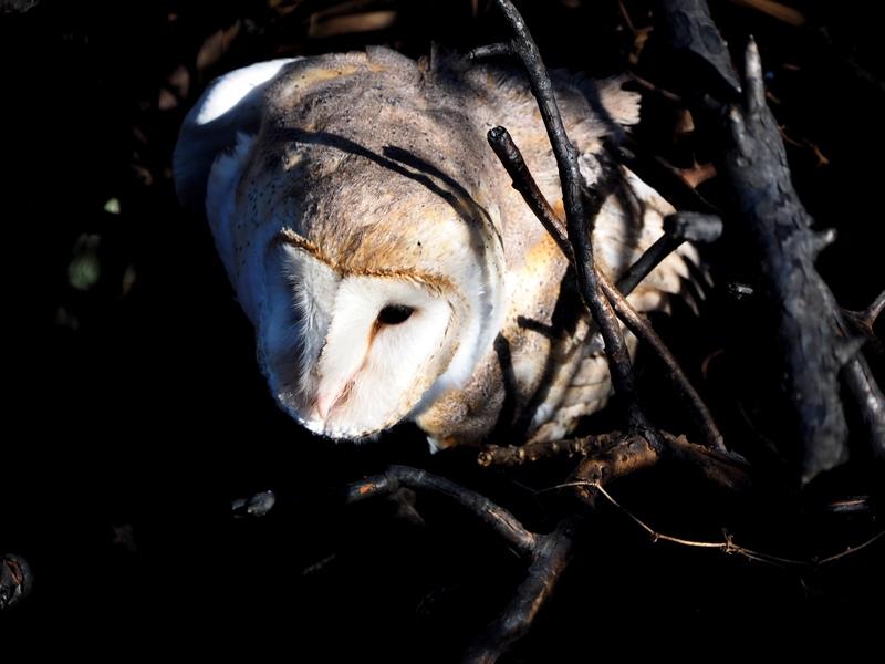 Encore quelques oiseaux de la Férme P8060012_zpspwv1ruq1