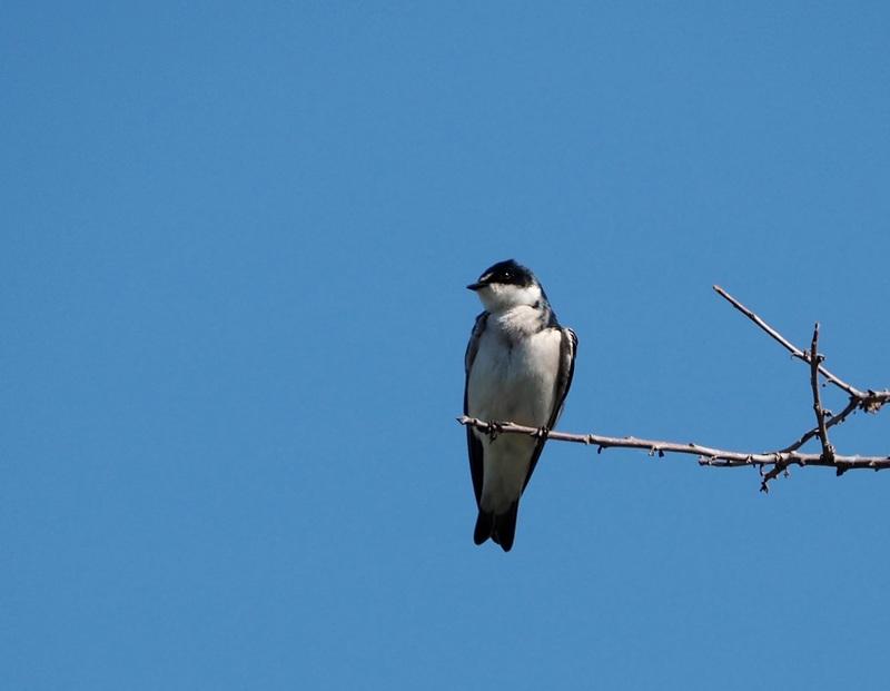 Encore quelques oiseaux de la Férme P8060016_zpsuca4u4l4