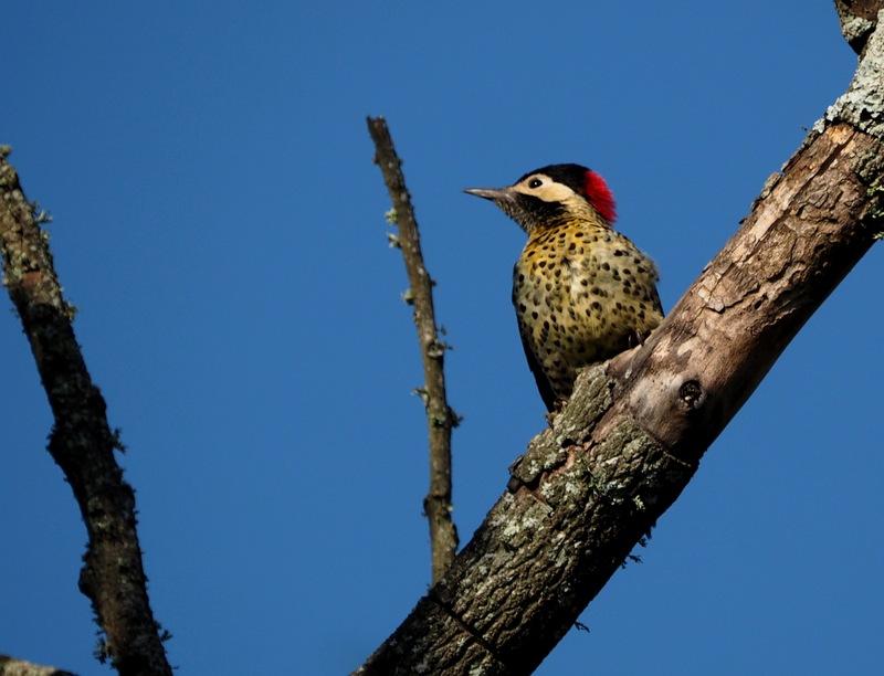 Encore quelques oiseaux de la Férme P8060019_zpsjciqwupg