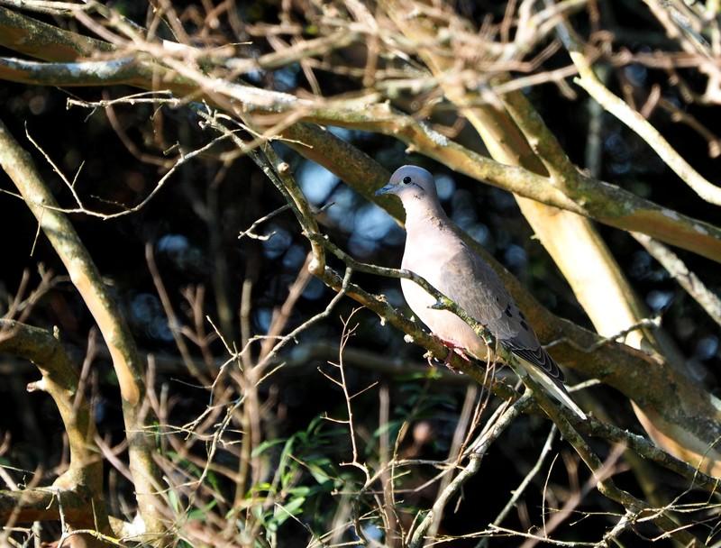 Encore quelques oiseaux de la Férme P8060020_zpshvgb2ymm
