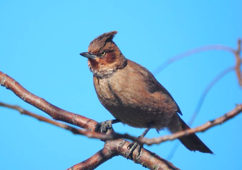 Cacholot brun P8260012_zpsnv1vtyag
