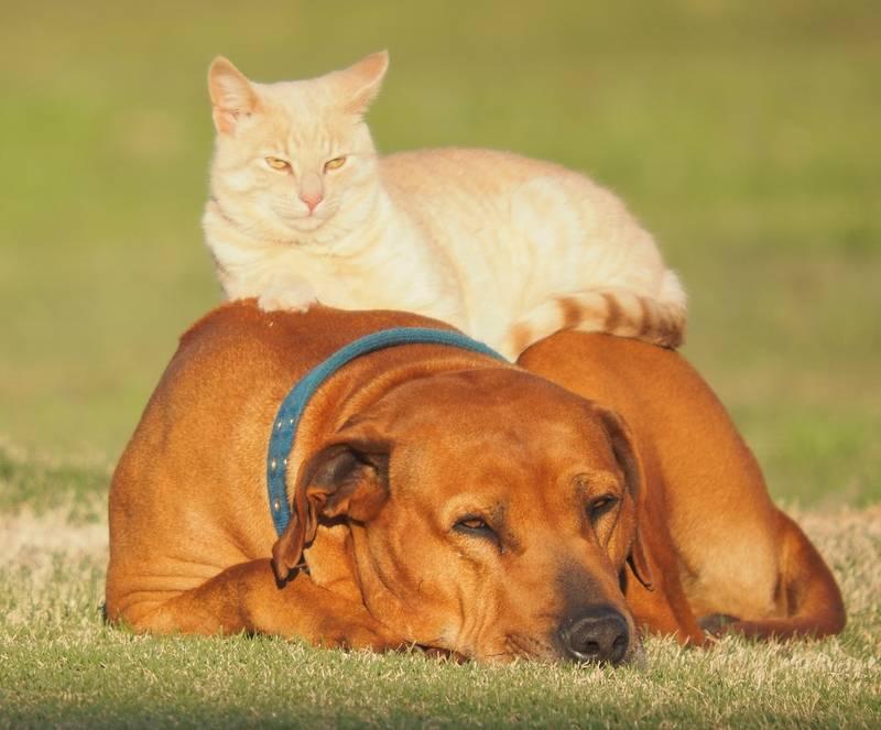 Encore Bico et le chat!! Ajoute°° P8270039_zpsxa7lr45t
