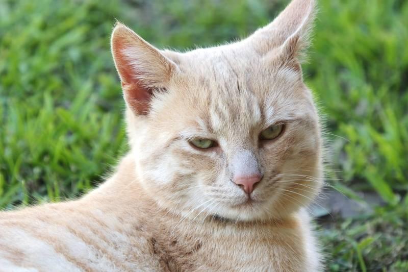 Encore Bico et le chat!! Ajoute°° P8280043_zpsllgjhha0