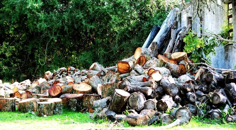 Du bois pour les foyers(Ajoute) P9080044_zpsxnsv2773