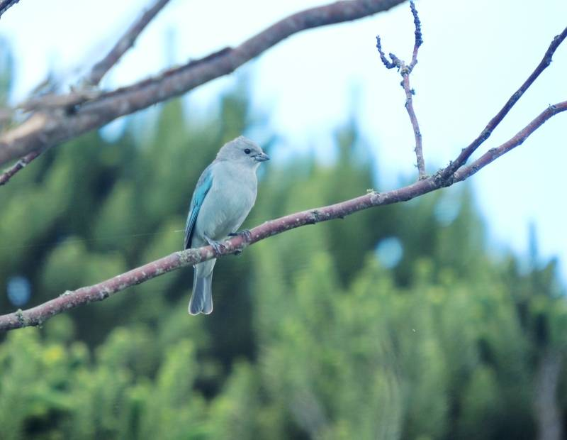 Oiseaux hier au jardin(Ajoute) P9300033_zps6ldwlleu
