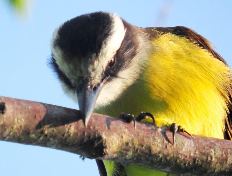 Oiseaux hier au jardin(Ajoute) P9300037%20-%20copia_zps0te4ek3s
