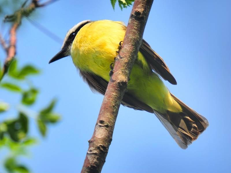 Oiseaux hier au jardin(Ajoute) P9300039_zpsvzczhgtb