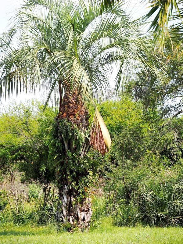 Palmier et fleur  PB010031_zpsmchaoe0n