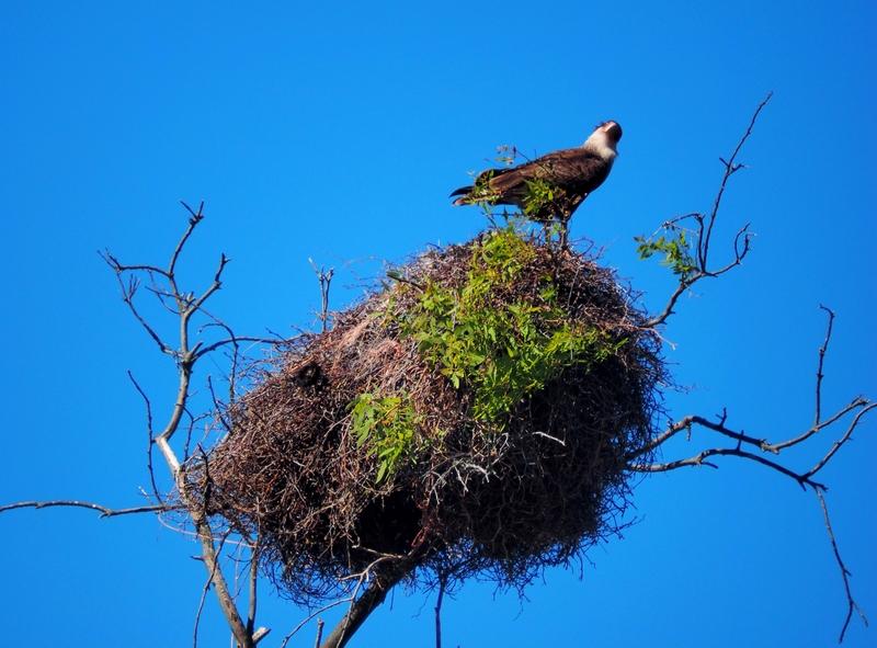 Sur un nid pérché!! PB040003_zpsmfwb7ayv