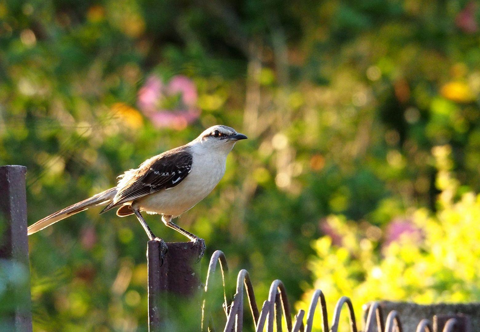 Sur un portail du jardin PC230027_zpsssvwkbmn