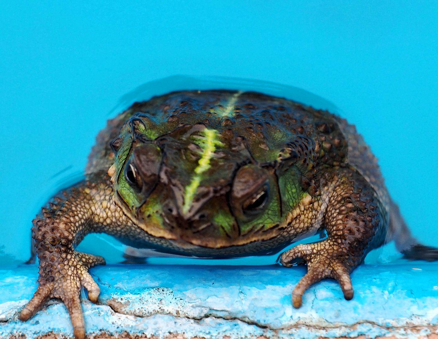Crapauds et grenouilles!!(Ajoute une) PC260008_zpsfi8ufkkx