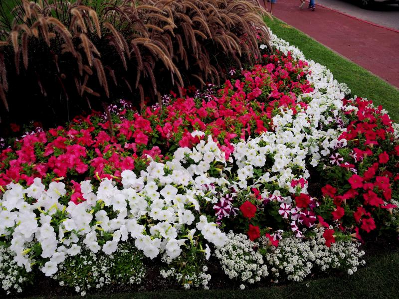 Les fleurs du batiment!! P1130025_zps61631ecb