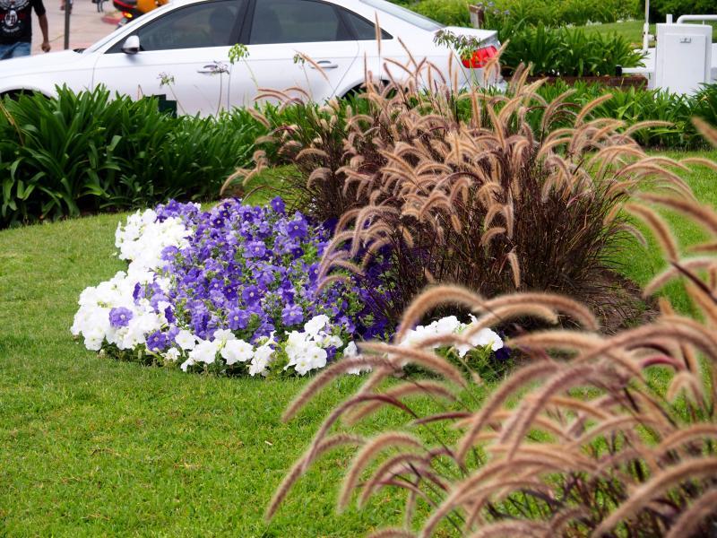 Les fleurs du batiment!! P1130027_zps9efcc082