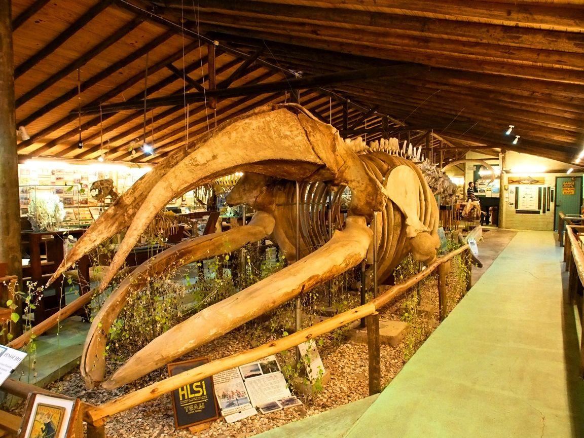 Au Musée de la Mer et Insectes!! P1150001_zpsmyb9hhva