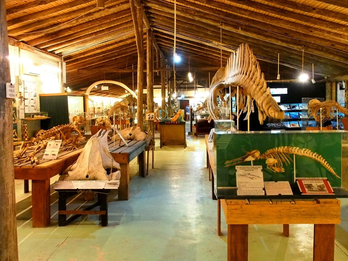 Au Musée de la Mer et Insectes!! P1150004_zpsiqxfev5y