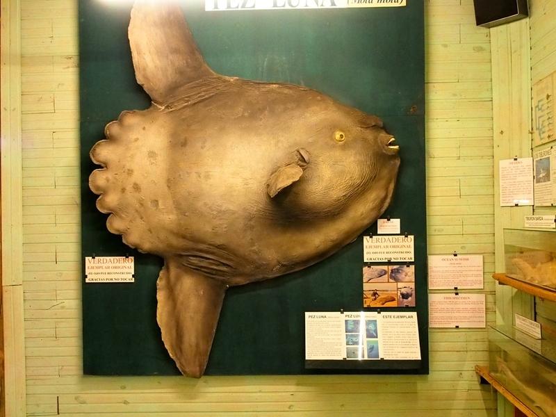 Au Musée de la Mer et Insectes!! P1150005_zpsu3wa3p8f