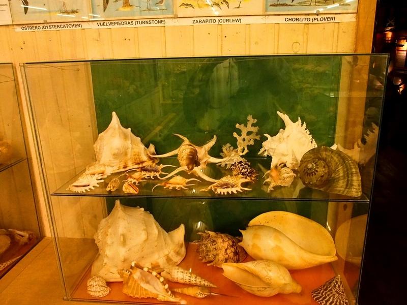 Au Musée de la Mer et Insectes!! P1150007_zpsyq0xrxpl