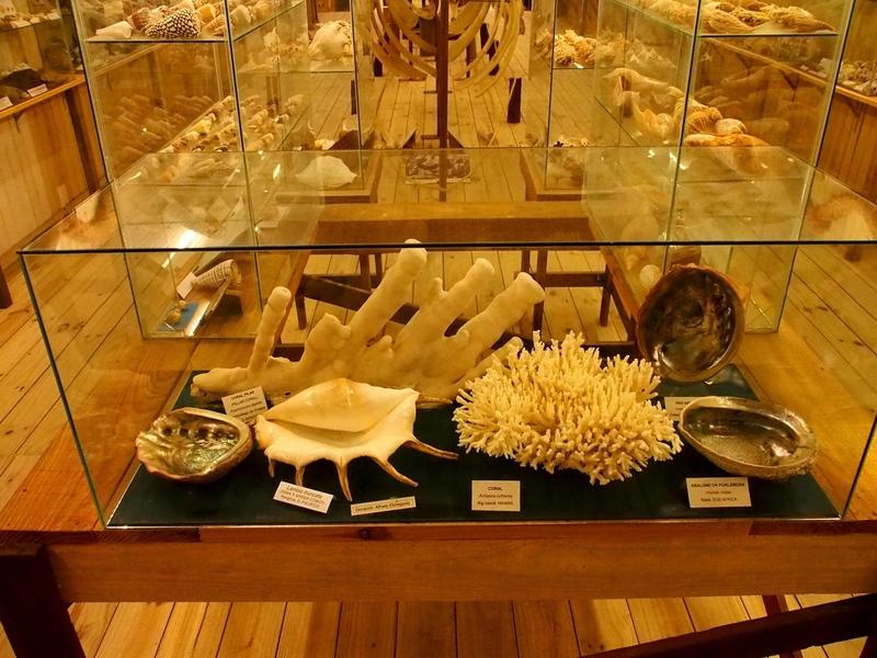 Au Musée de la Mer et Insectes!! P1150008_zps9ezhvn8d