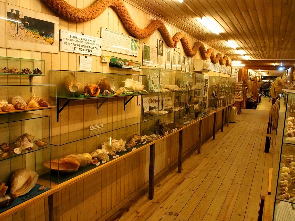 Au Musée de la Mer et Insectes!! P1150009_zpswcpsvaz1