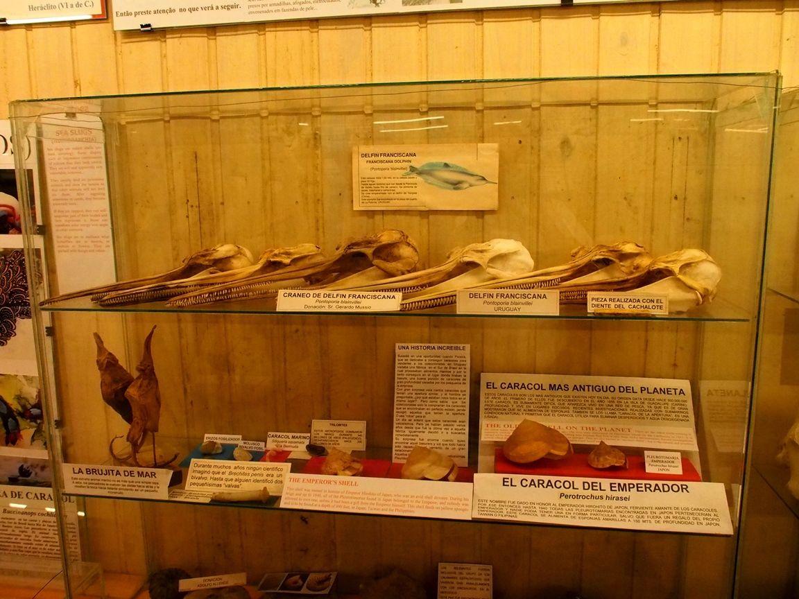 Au Musée de la Mer et Insectes!! P1150010_zpsyxxrgcak