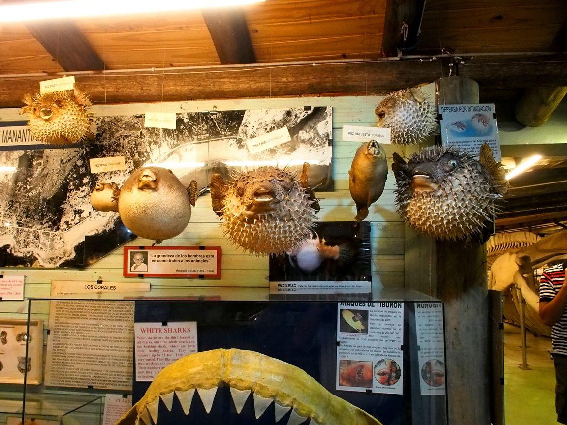 Au Musée de la Mer et Insectes!! P1150013_zpsnbbc99u1
