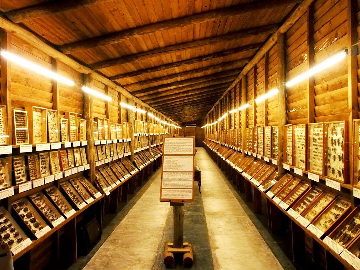 Au Musée de la Mer et Insectes!! P1150016_zps2alouiqv