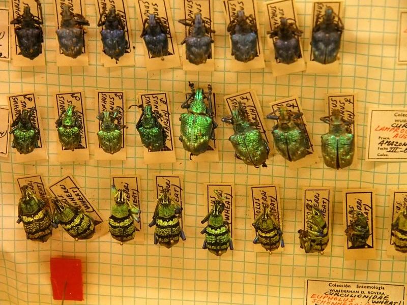 Au Musée de la Mer et Insectes!! P1150022_zpszquc2gvb