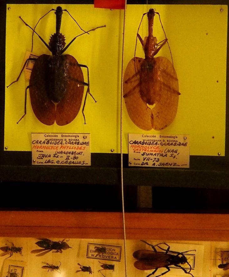 Au Musée de la Mer et Insectes!! P1150026_zpstqdg5ntl