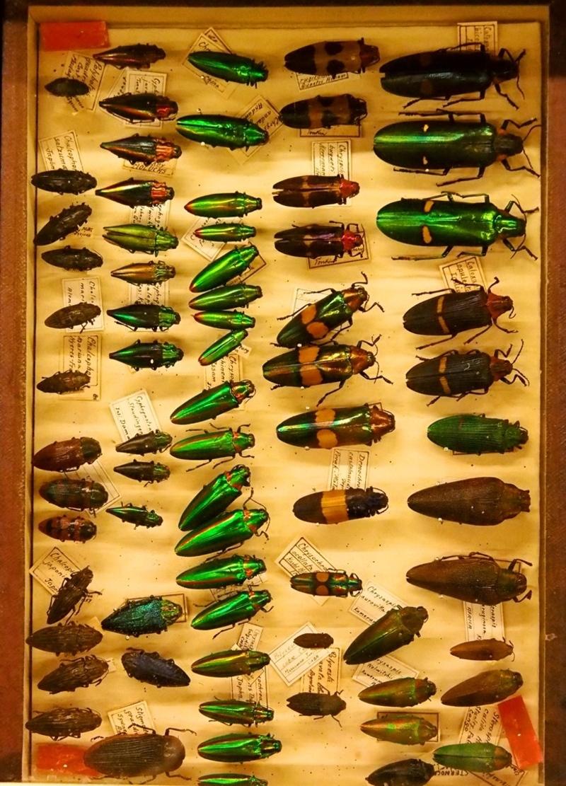Au Musée de la Mer et Insectes!! P1150027_zpsg4rsggyo