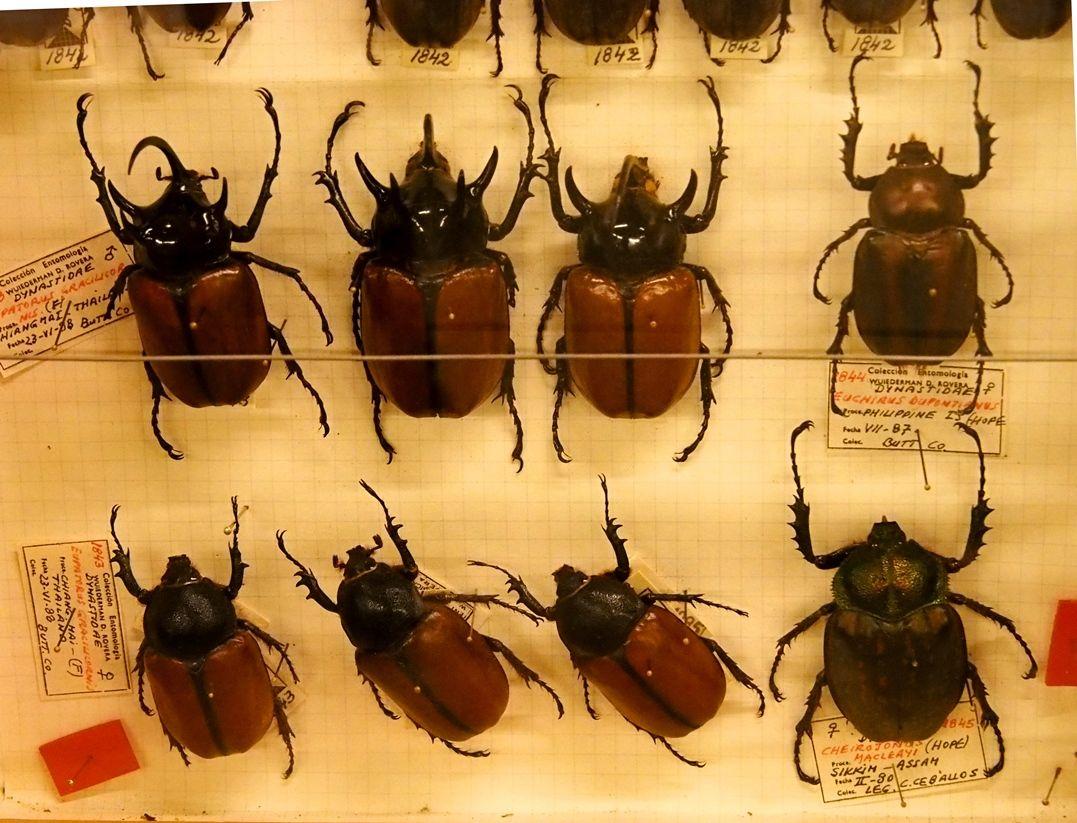 Au Musée de la Mer et Insectes!! P1150029_zpsr9oif03k
