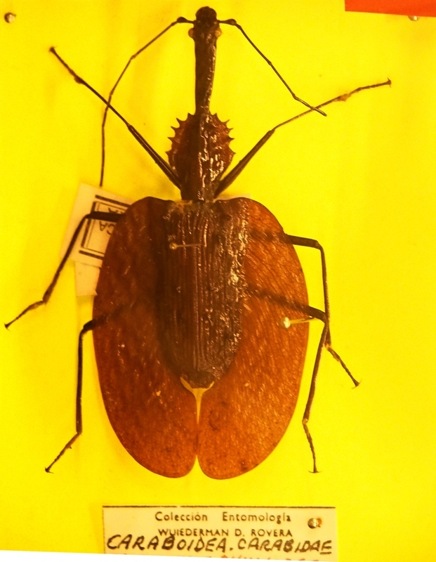 Au Musée de la Mer et Insectes!! P1150031_zpswn7b01wi