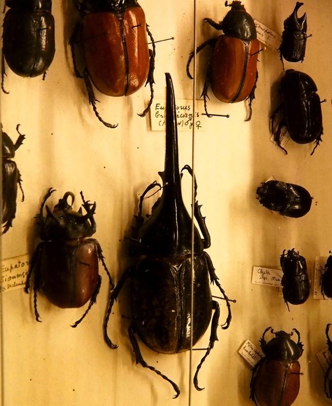 Au Musée de la Mer et Insectes!! P1150032_zpsflv5jtk3