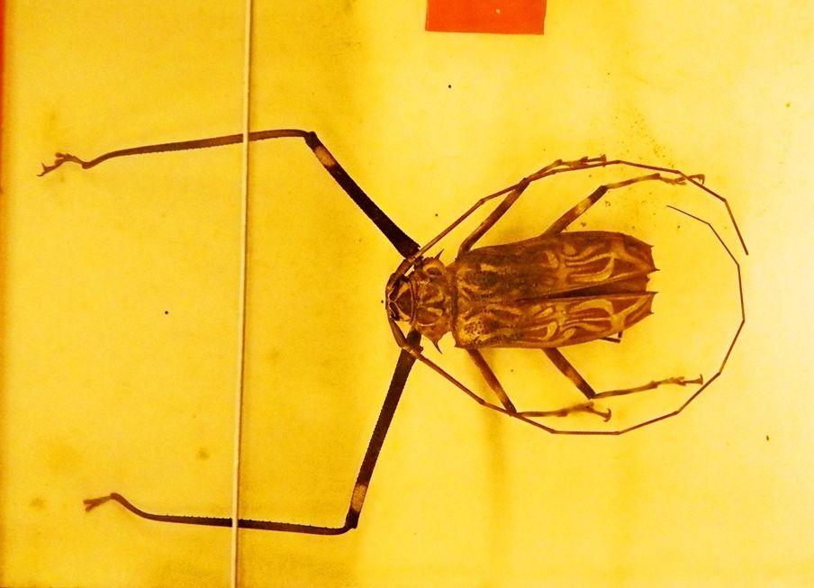 Au Musée de la Mer et Insectes!! P1150033_zps536vfqoq