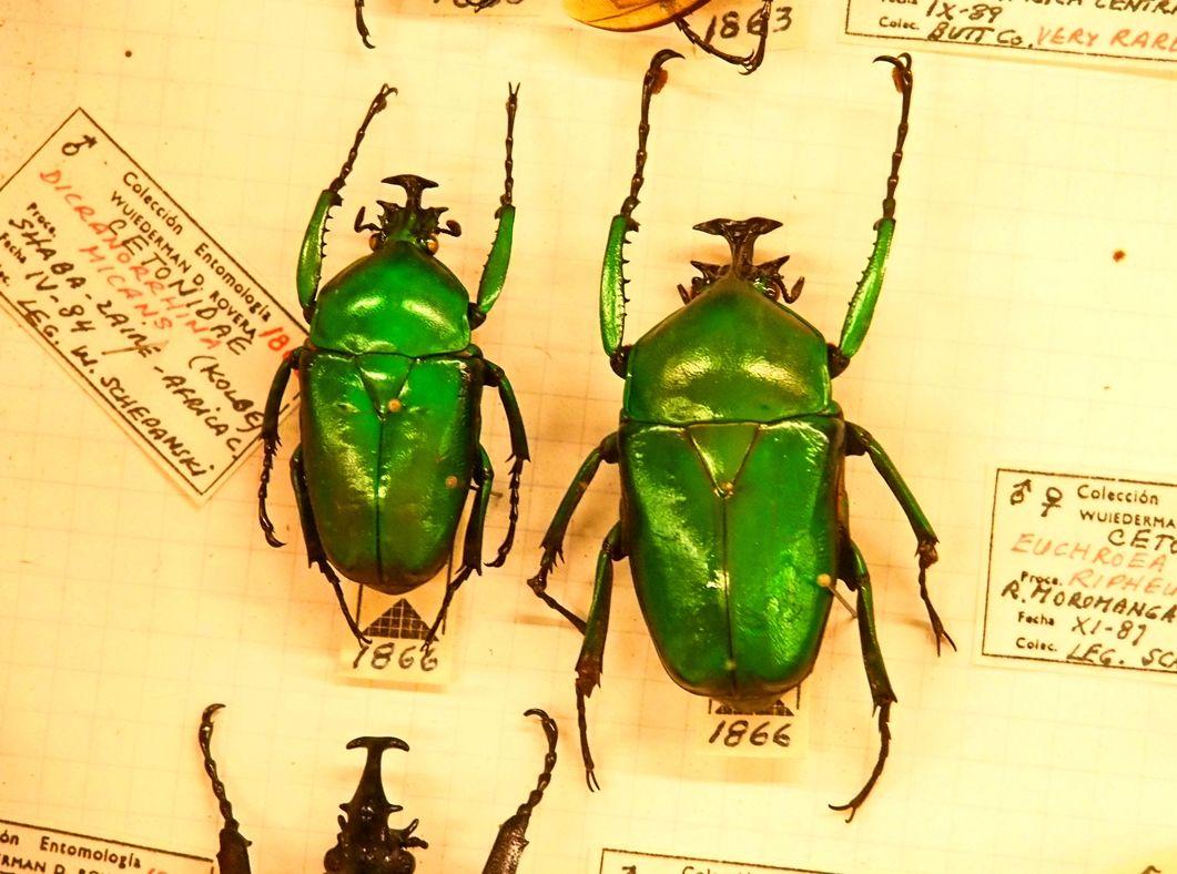 Au Musée de la Mer et Insectes!! P1150036_zpsuwbtlvwo
