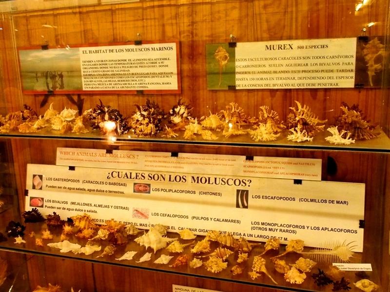 Musée de la Mer(Mollusques) P1260008_zps49gluxl5