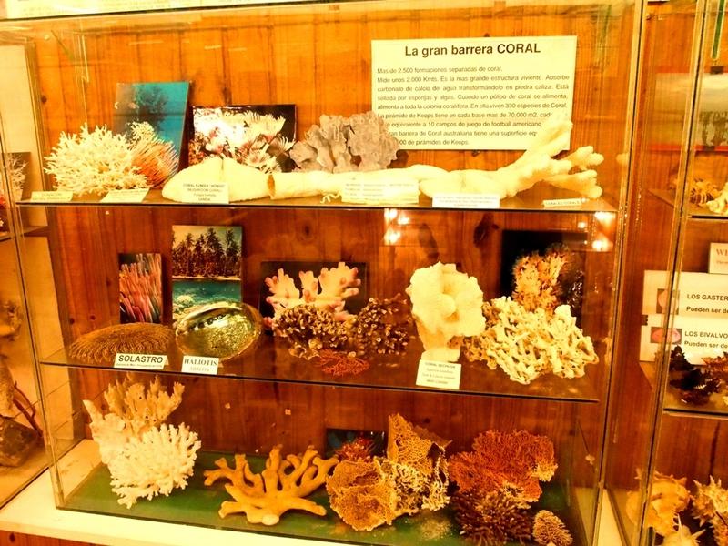 Musée de la Mer(Mollusques) P1260009_zpsmonewffe