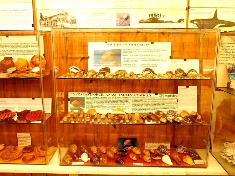 Musée de la Mer(Mollusques) P1260010_zpsu4fydkjp