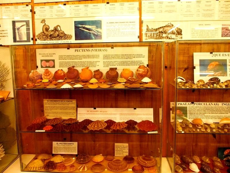 Musée de la Mer(Mollusques) P1260011_zpsjelvwxdj