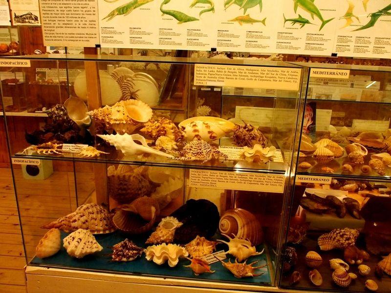 Musée de la Mer(Mollusques) P1260012_zps2erfj1jx