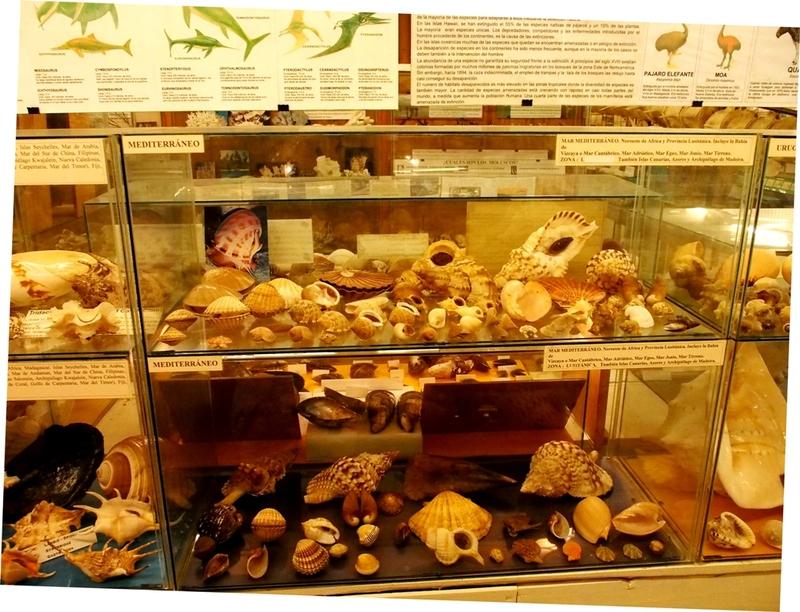 Musée de la Mer(Mollusques) P1260013_zpszv6capzn